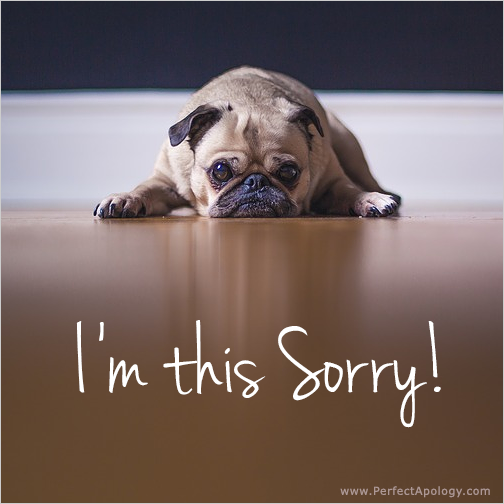 Image of a puppy looking sad saying I'm this sorry