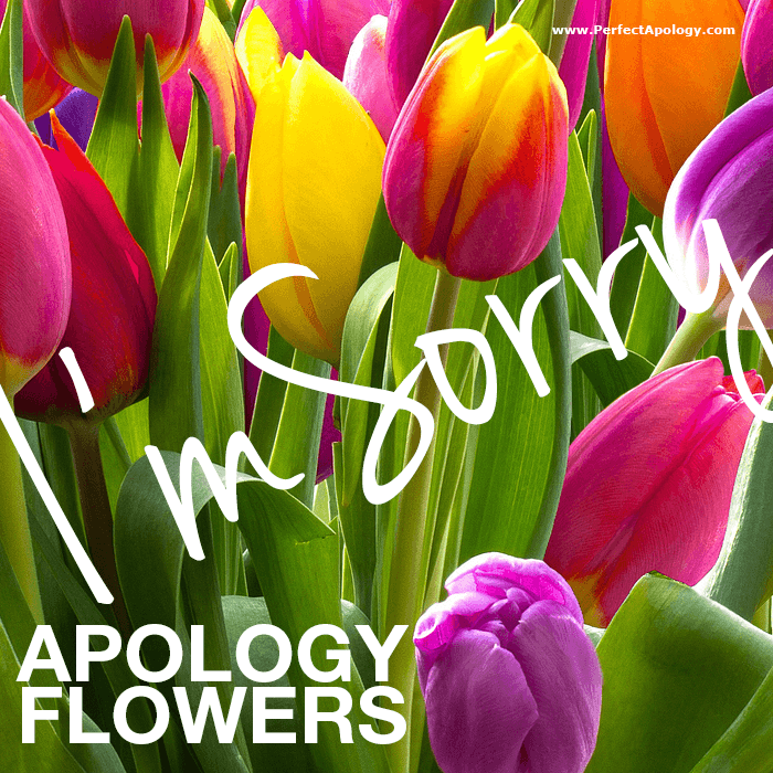 tulips and greenery with I'm sorry written across