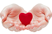 Open hands holding a red heart